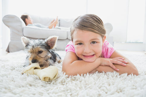 pet odor removal in san diego