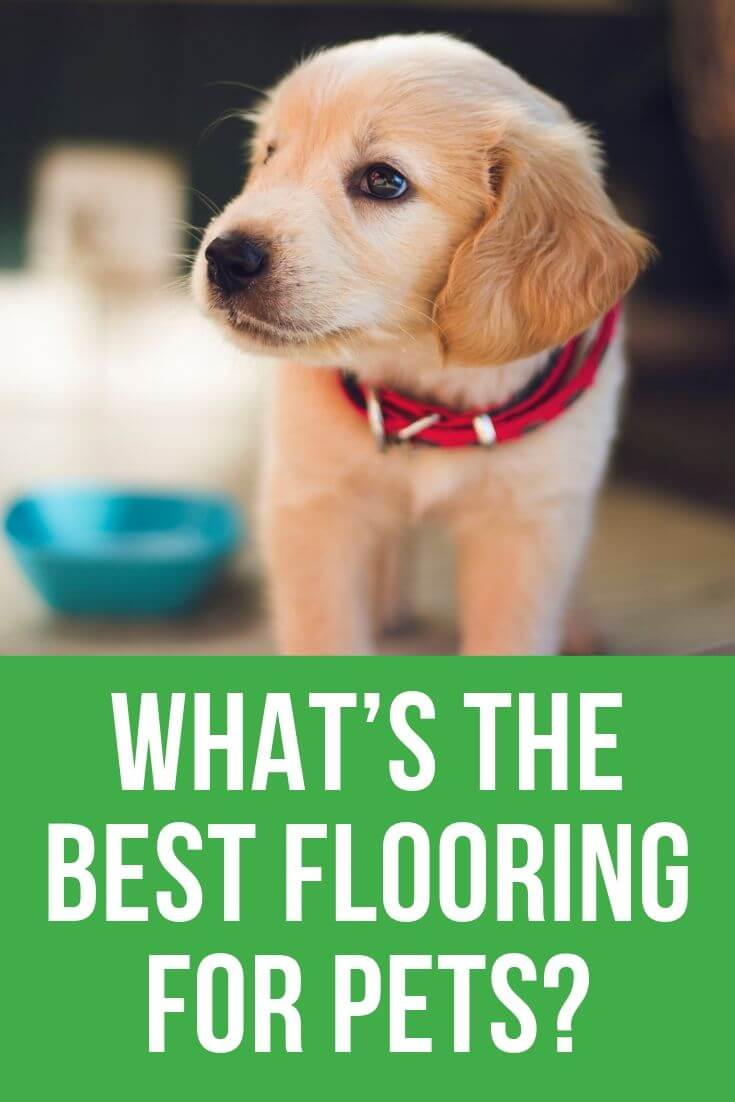 best flooring for pets in san diego