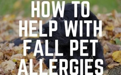 How to Help With Fall Pet Allergies