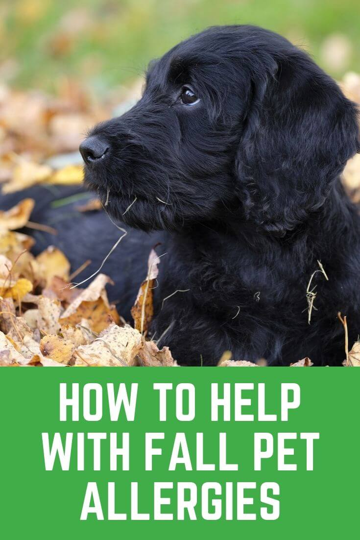 Tips for helping with fall pet allergies