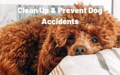 Cleaning Up Dog Accidents