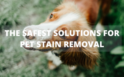 The Safest Solutions for Pet Stain Removal