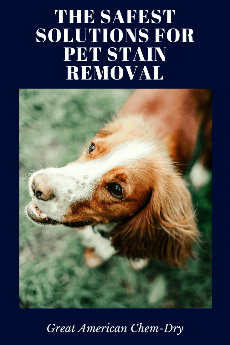 safe Pet stain removal in vista, ca