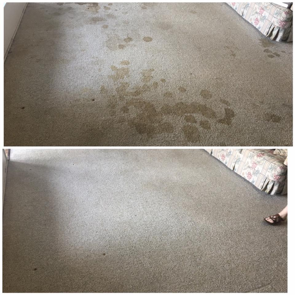 pet urine stain and odor removal in san diego