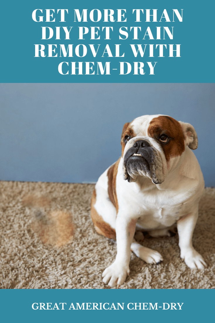 Best pet stain removal solution in Carlsbad, CA